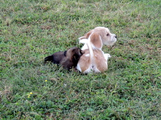 The Basset Hound is Xavier, the Glechon is Maddy and the others are Shorkie Tzus