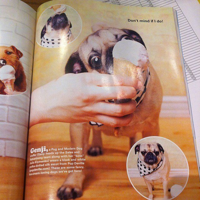 Congratulations to Genji on her recent picture in Modern Dog Magazine! Her proud owners are Julia & Alex Klymenko.