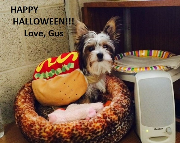 Happy Halloween from Gus