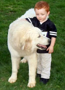 Great Pyrenees, Zowe, and William