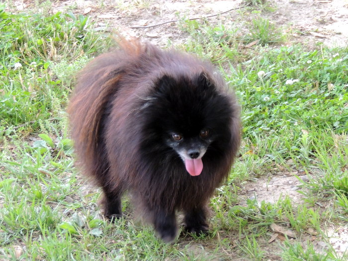 MD, our Pomeranian