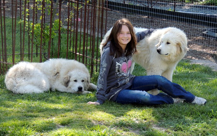 Our Great Pyrenees, Louloo and Zowee with August